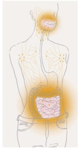 歯の健康と小腸ケア